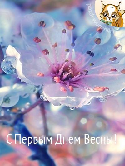 Поздравляю с Весной!